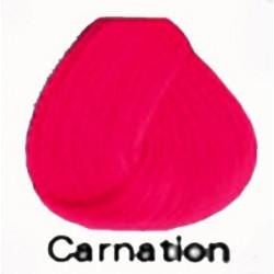 CARNATION Directions Haartönung